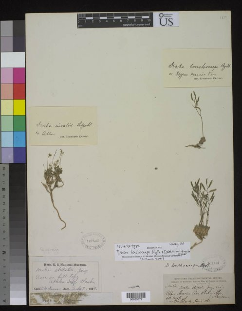 http://collections.mnh.si.edu/search/botany/?irn=10087790
