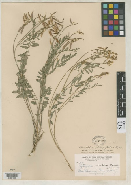http://collections.mnh.si.edu/search/botany/?irn=2127042