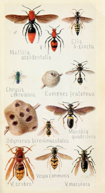 http://www.flickr.com/photos/biodivlibrary/6244371650/