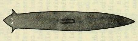 http://commons.wikimedia.org/wiki/File:Girardia_dorotocephala.jpg
