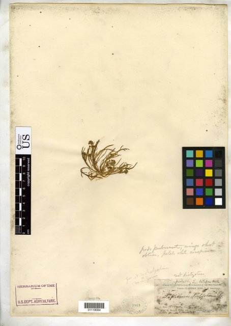 http://collections.mnh.si.edu/search/botany/?irn=10377402