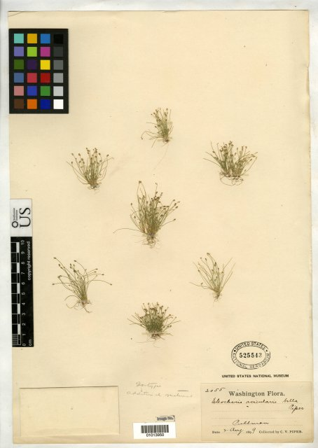 http://collections.mnh.si.edu/search/botany/?irn=10086507