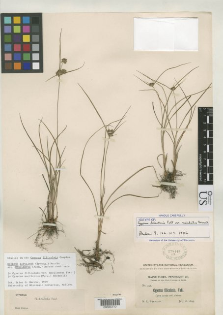 http://collections.mnh.si.edu/services/media.php?env=botany&irn=10130483