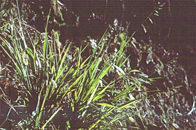 http://calphotos.berkeley.edu/imgs/512x768/0000_0000/0901/0511.jpeg