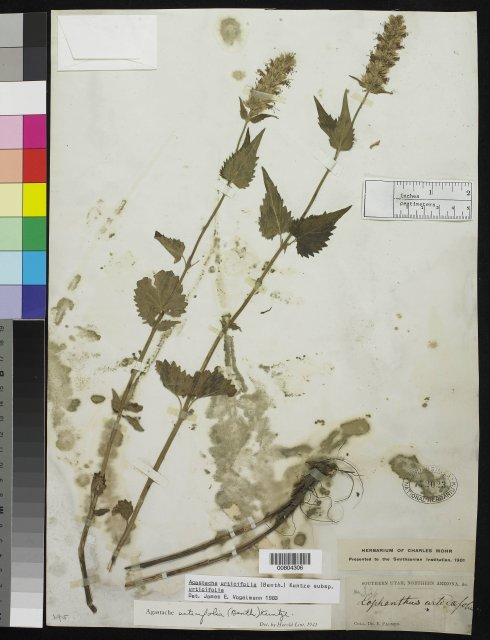 http://collections.mnh.si.edu/search/botany/?irn=10141025