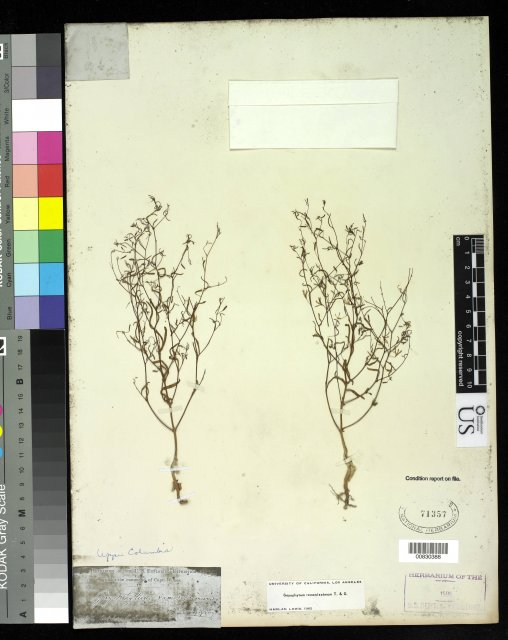 http://collections.mnh.si.edu/search/botany/?irn=10061630