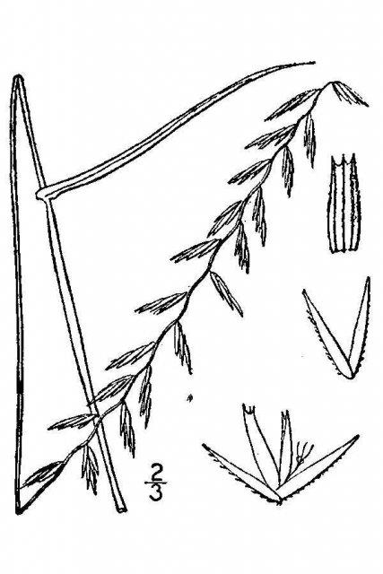 http://plants.usda.gov/java/largeImage?imageID=atcu2_001_avd.tif