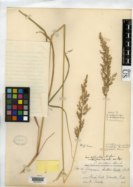 http://collections.mnh.si.edu/services/media.php?env=botany&irn=10048940