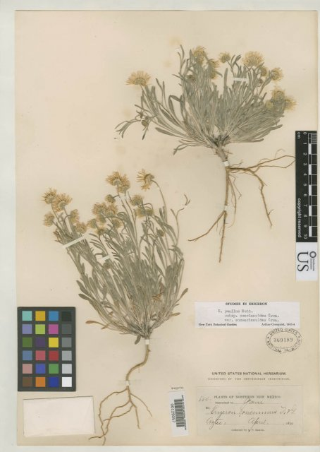 http://collections.mnh.si.edu/search/botany/?irn=2788971