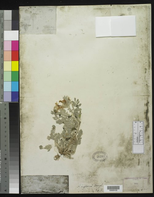 http://collections.mnh.si.edu/search/botany/?irn=10059718
