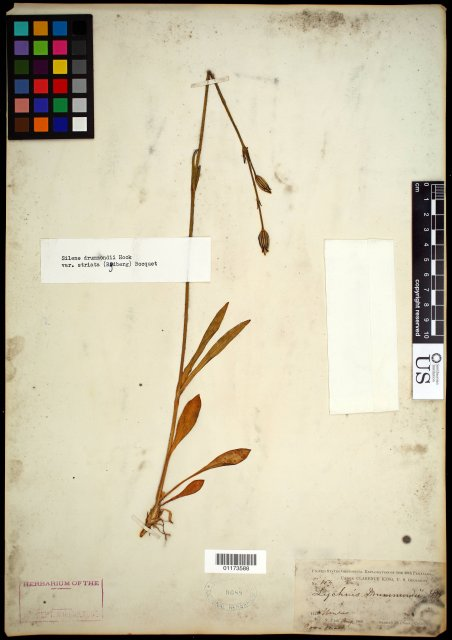 http://collections.mnh.si.edu/search/botany/?irn=10788181