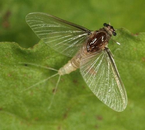 http://www.bioimages.org.uk/vfg/MWSt/CanonEOS400D+T90/2008/08-06/08-06-07/08F07C_7.jpg