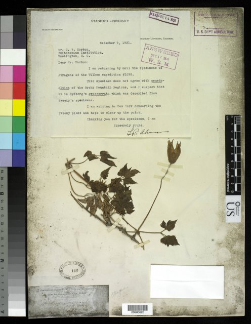 http://collections.mnh.si.edu/search/botany/?irn=10058228