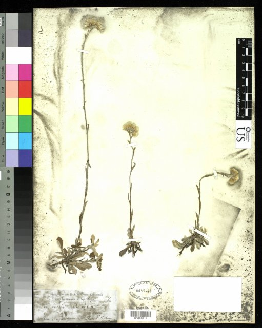 http://collections.mnh.si.edu/services/media.php?env=botany&irn=10215538