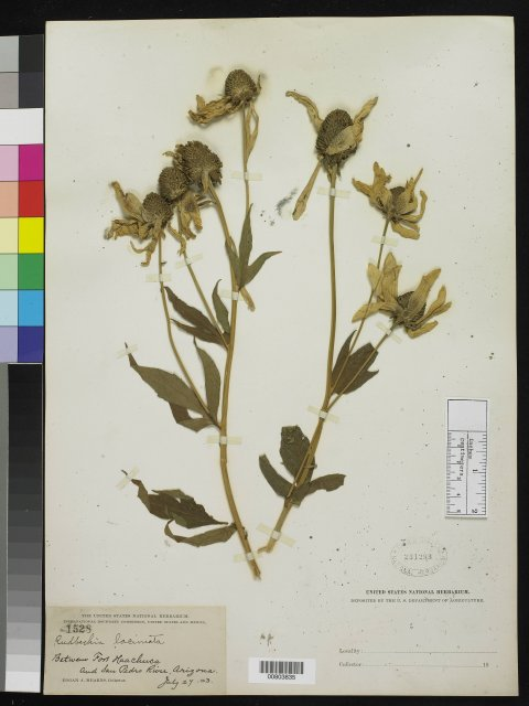 http://collections.mnh.si.edu/search/botany/?irn=10141058