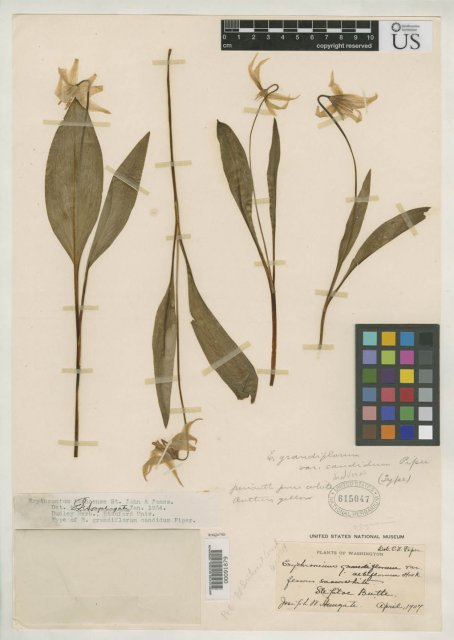 http://collections.mnh.si.edu/search/botany/?irn=2106335