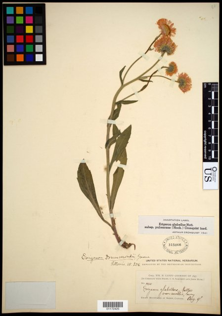 http://collections.mnh.si.edu/search/botany/?irn=10799726