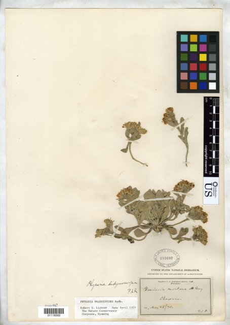 http://collections.mnh.si.edu/search/botany/?irn=10384177