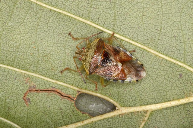 http://www.bioimages.org.uk/html/p6/p60610.php