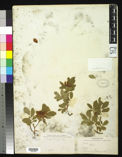 http://collections.mnh.si.edu/search/botany/?irn=10174913