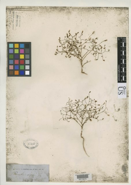 http://collections.mnh.si.edu/search/botany/?irn=2136920