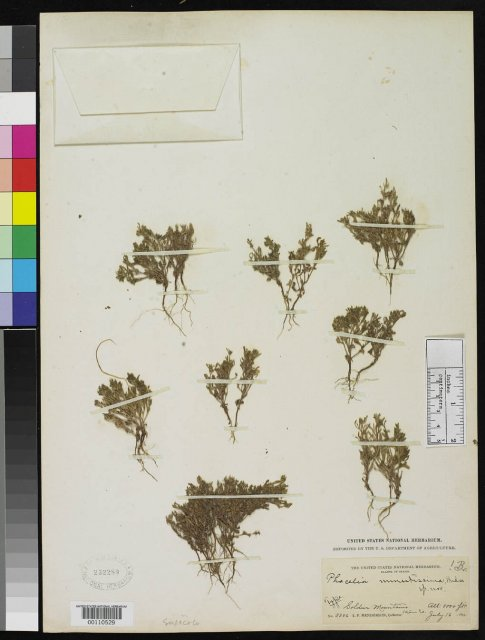 http://collections.mnh.si.edu/search/botany/?irn=2086323