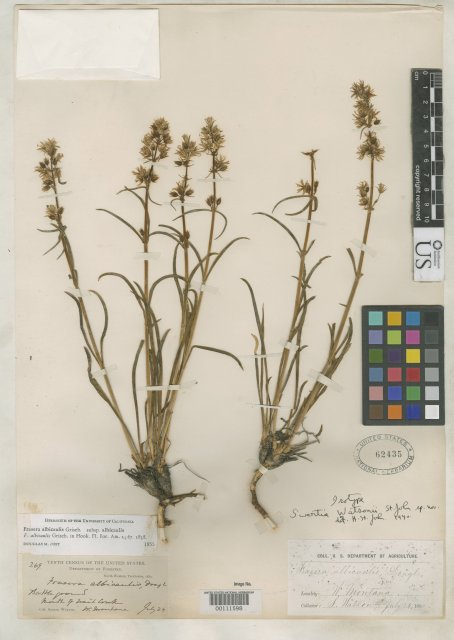 http://collections.mnh.si.edu/search/botany/?irn=2086434