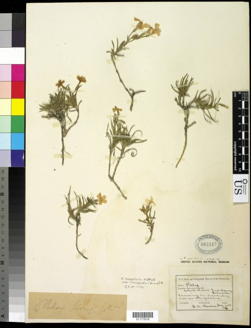 http://collections.mnh.si.edu/search/botany/?irn=10592741