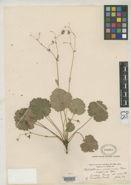 http://collections.mnh.si.edu/services/media.php?env=botany&irn=10064589