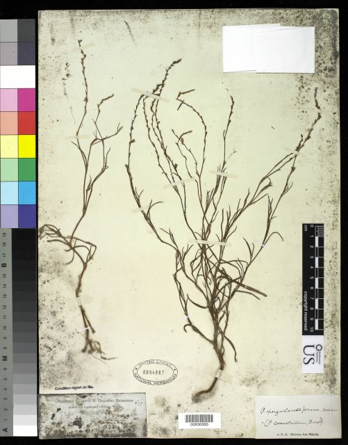 http://collections.mnh.si.edu/search/botany/?irn=10057875