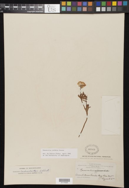 http://collections.mnh.si.edu/search/botany/?irn=10800888