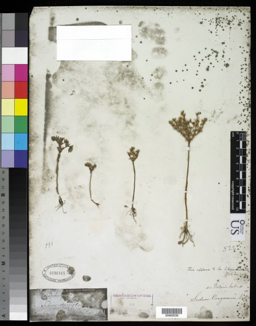 http://collections.mnh.si.edu/search/botany/?irn=10058393
