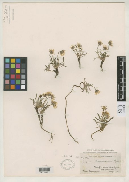 http://collections.mnh.si.edu/search/botany/?irn=2137797