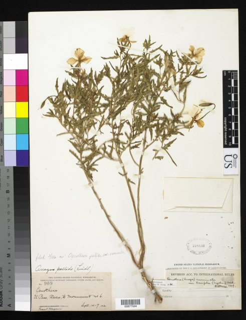 http://collections.mnh.si.edu/services/media.php?env=botany&irn=10282951