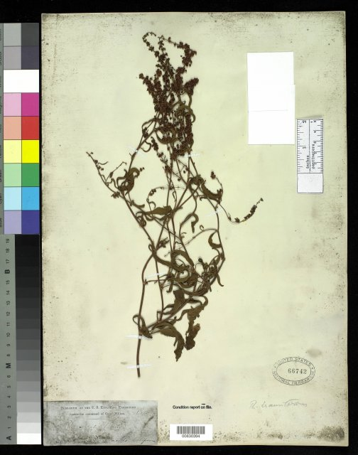 http://collections.mnh.si.edu/search/botany/?irn=10057825