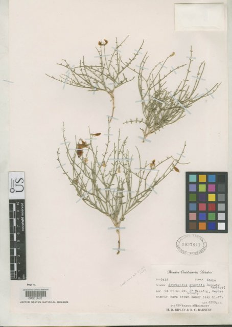 http://collections.mnh.si.edu/search/botany/?irn=2158646