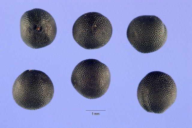 http://plants.usda.gov/gallery/large/vahi2_001_lhp.jpg