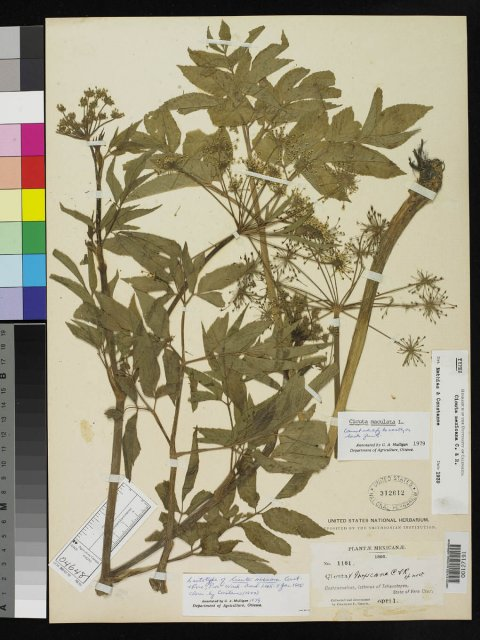 http://collections.mnh.si.edu/search/botany/?irn=2095591