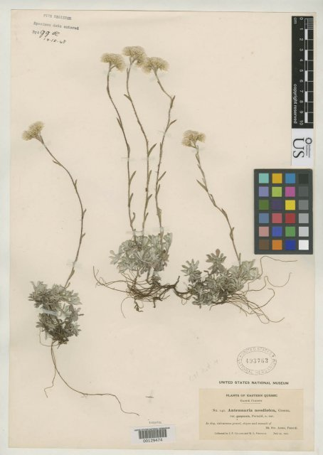 http://collections.mnh.si.edu/search/botany/?irn=2086226