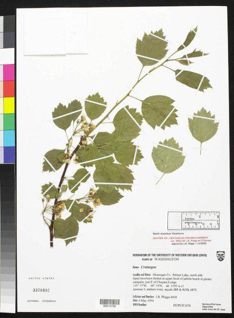 http://collections.mnh.si.edu/search/botany/?irn=10077830