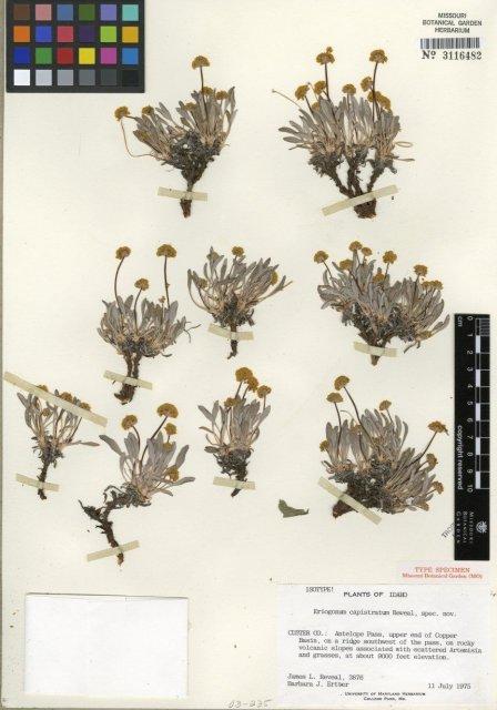 http://images.mobot.org/tropicosdetailimages/Tropicos/260/EC353B26-C2CD-47D0-8B70-79322AF389DF.jpg