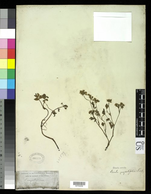 http://collections.mnh.si.edu/services/media.php?env=botany&irn=10214568