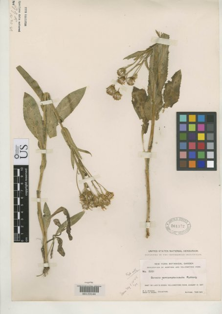 http://collections.mnh.si.edu/services/media.php?env=botany&irn=10111928
