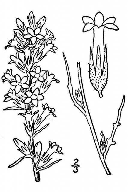 http://plants.usda.gov/java/largeImage?imageID=gisp4_001_avd.tif