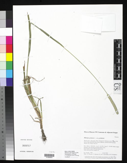 http://collections.mnh.si.edu/search/botany/?irn=10368818