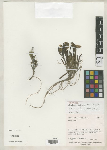 http://collections.mnh.si.edu/search/botany/?irn=2162607