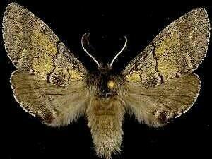 http://mothphotographersgroup.msstate.edu/species.php?hodges=7934