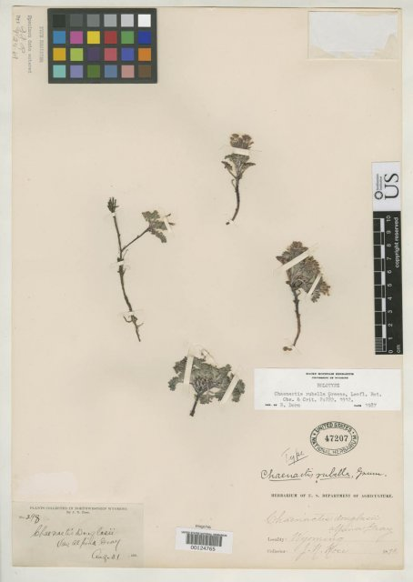 http://collections.mnh.si.edu/search/botany/?irn=2095629