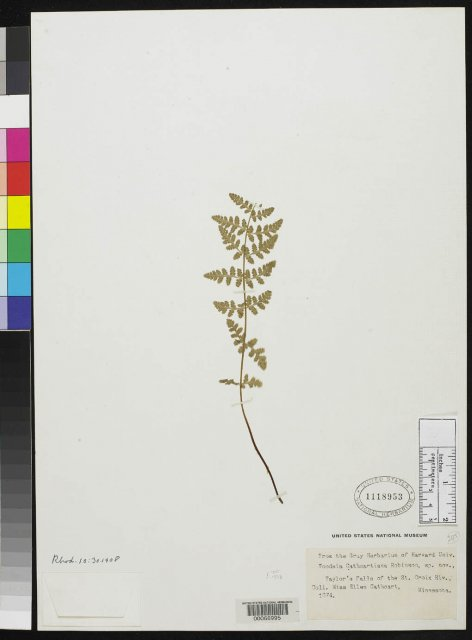 http://collections.mnh.si.edu/search/botany/?irn=2114473