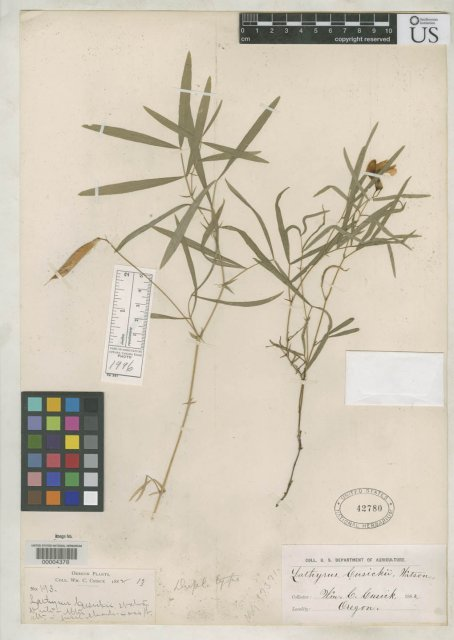 http://collections.mnh.si.edu/search/botany/?irn=2123854